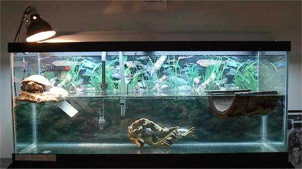red eared slider tank setup ziggy is my red ear slider
